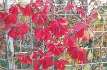 美丽的桃河秋景