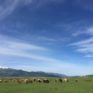 唐布拉草原旅游景点攻略图