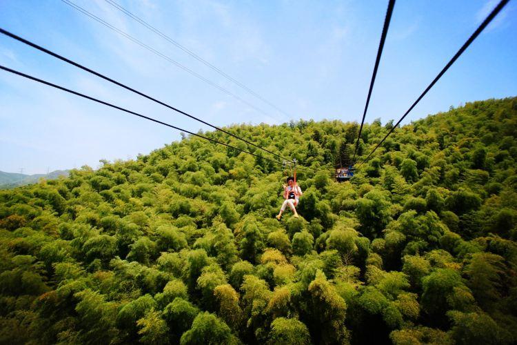 저둥대나무관광지1