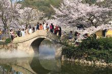 鼋头渚樱花节