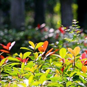 松雅湖湿地公园旅游景点攻略图