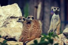 #动物园#参观野生动物园