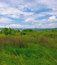 [额尔古纳游记图片] 在呼伦贝尔的初夏,寻一曲绿色的草原牧歌(呼伦贝尔北线6天5晚包车自由行)