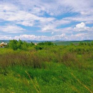 临江游记图文-在呼伦贝尔的初夏,寻一曲绿色的草原牧歌(呼伦贝尔北线6天5晚包车自由行)