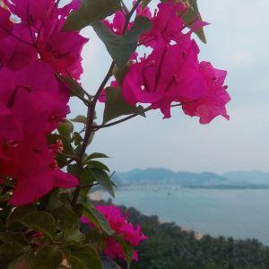凤凰岛旅游景点攻略图
