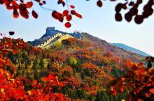 北京的红叶,不止在香山 l 京城红叶浪漫地,每一个角落都不容错过