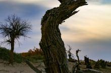 怪树林: 生命礼赞