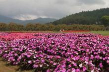 富士山脚下美丽的花园