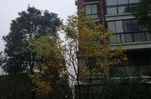 冬雨绵绵,凉风嗖嗖,江南初冬,小区随拍