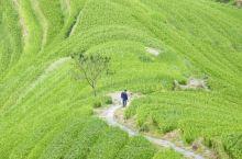 世界上最大的龙脊梯田应该怎么玩?