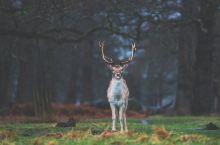 优雅而又蠢萌,伦敦郊区林间的精灵