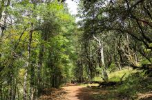 岗云杉林,中国最美森林之一
