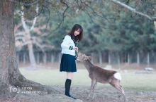 奈良 和网红小鹿们一起玩耍