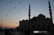 清晨的伊斯坦布尔,天空依然幽暗有鸽子在飞翔。