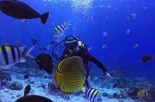 台东绿岛,不可错过的冬季旅行潜水体验