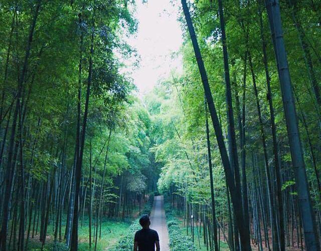 大奇山國家森林公園4