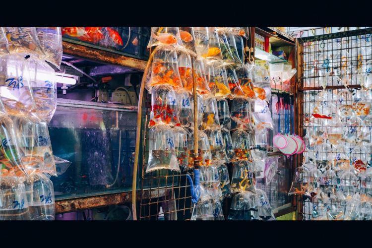 Tung Choi Street2