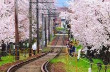 2019冲绳赏樱攻略|1月,遇见全日本最早盛开的樱花~