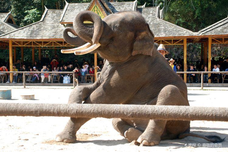 Wild elephant valley1