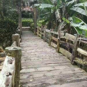溪头村旅游景点攻略图
