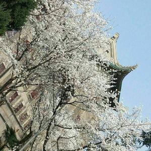 武大樱花旅游景点攻略图