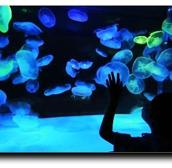 San Antonio Aquarium1
