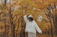 日本小众赏枫手册  这些才是明星也爱去的赏枫好地!