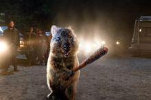 七彩澳游世界袋鼠乐园
