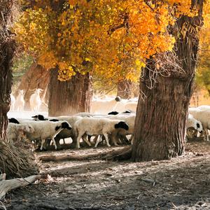 额济纳旗游记图文-探访北疆秘境,额济纳河畔矗立的大漠胡杨林