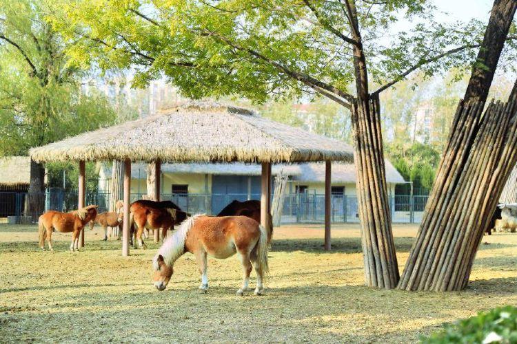 지난 동물원1