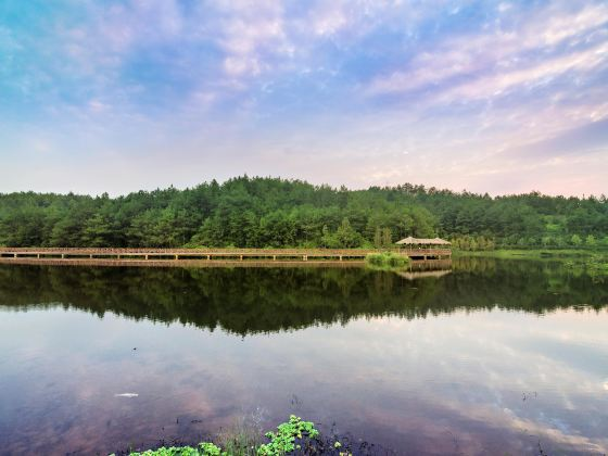 汀江國家濕地公園