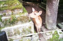 奈良看萌鹿