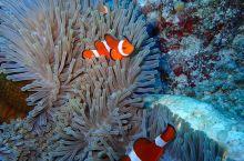 在绿岛体验式潜水
