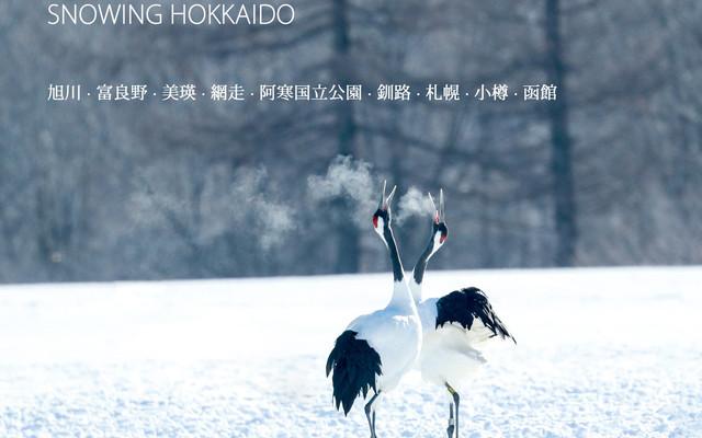 [南山Nathan]雪の北海道(圣诞+元旦野性北国摄影之旅)