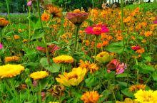 #行摄海口香世界庄园#  春天,万紫千红,不要错过美好的时光,去看那花花世界。 身体和灵魂,总要有一