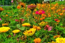 #行摄海口香世界庄园#  🌸春天,万紫千红,不要错过美好的时光,去看那花花世界。 身体和灵魂,总要有