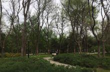 玲珑公园的春花 玲珑公园除了塔之外还有不少种花在盛开,这里是北京春天的景色,近期天气很好,空气质量不
