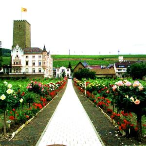 赞丹游记图文-欧洲:荷兰的大风车+德国的古堡7天,莱茵河畔像花那样美!