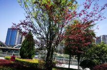 湖南郴州市资兴市五月的景色,很迷人!