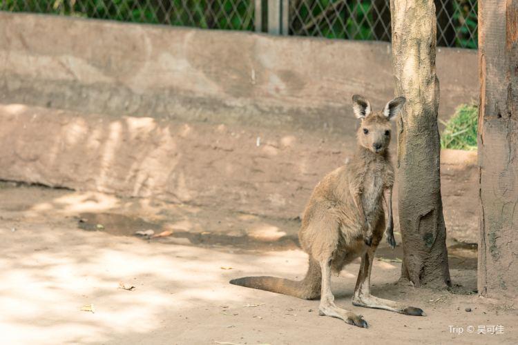 重慶動物園4