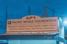 全夏威夷公认的最佳观鲸地点