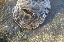 趵突泉泉位居济南七十二名泉之首,也是最早见于古代文献的济南名泉。趵突泉是泉城济南的象征与标志,与济南