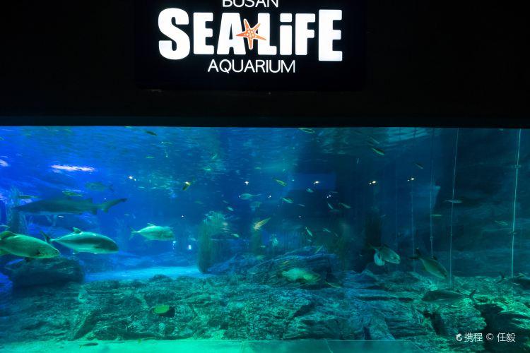Busan Aquarium3