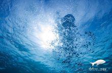 新年第一潜去哪儿呢?这么多的菲律宾潜点任你挑!