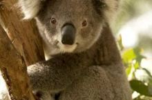 我们不一样!来澳大利亚,过个不一样的春节!