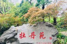 国色天香:2018年清明时节,走进上海长风公园,恰逢牡丹盛开,花团锦簇,让人陶醉⋯⋯ 上海中山公园内