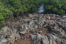 东兴的红树林保护区