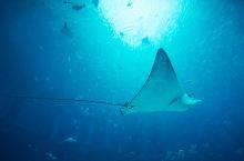 实拍:三亚|亚特兰蒂斯,神秘的海底世界终于揭开面纱!