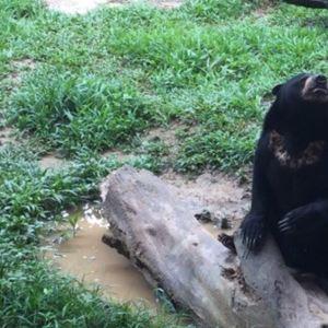 洛高宜野生动物园旅游景点攻略图