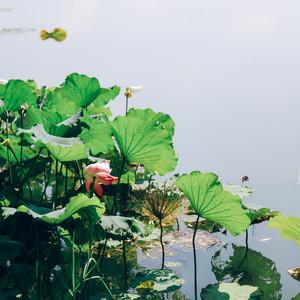 三山岛游记图文-梦里三山,江南秋日里的太湖美
